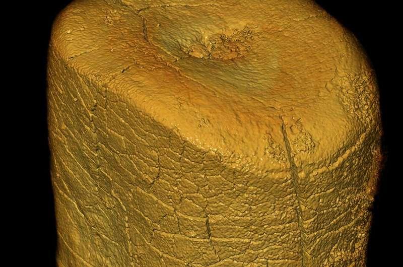 Neandertals' main food source was definitely meat