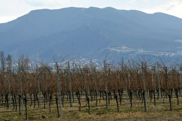 Nestling between the Great Caucasus Mountains and the Black Sea, Georgia has a mild climate that is perfect for vineyards