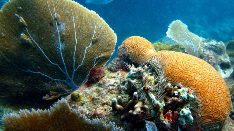 New danger for corals in warming oceans: Metal pollution
