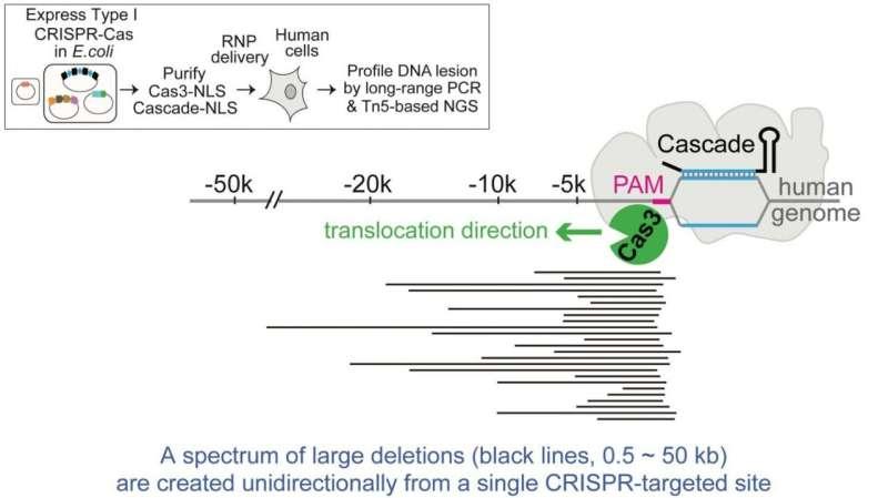 New DNA 'shredder' technique goes beyond CRISPR's scissors