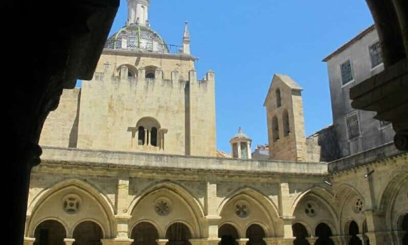 New family of fungi threatens a UNESCO-listed 8-century-old cathedral in Portugal