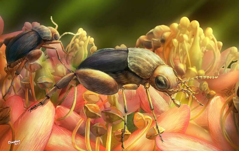 New fossil pushes back physical evidence of insect pollination to 99 million years ago