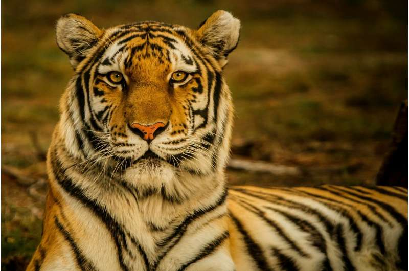 New mathematical model can help save endangered species