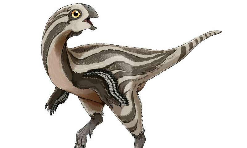 New oviraptorosaur species discovered in Mongolia