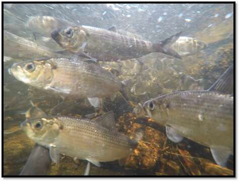 New study compiles gulf of maine seasonal wildlife timing shifts