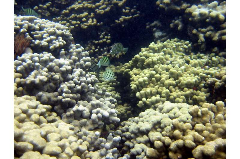 New study measures UV-filters in seawater and corals from Hawaii
