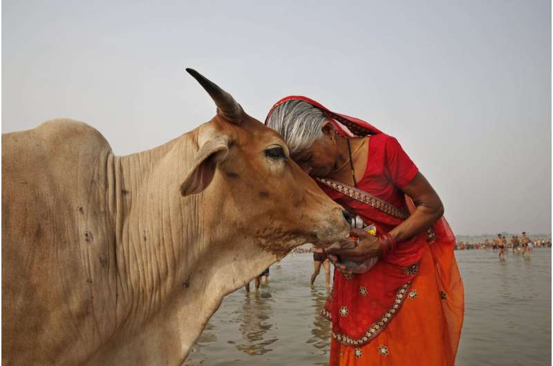 New tuberculosis tests pave way for cow vaccination programs