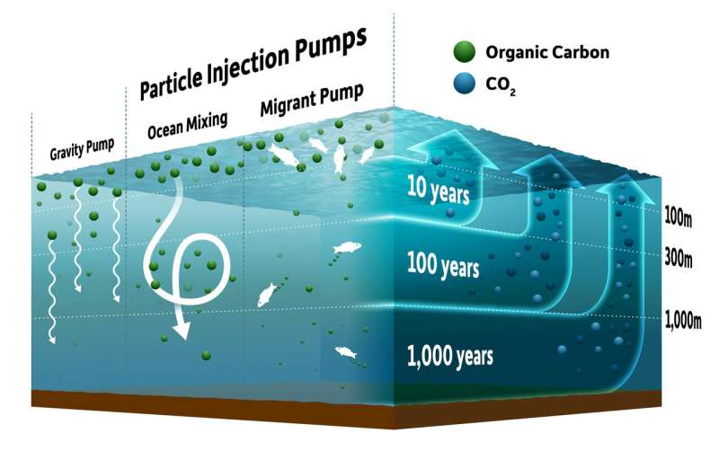 New view of how ocean 'pumps' impact climate change