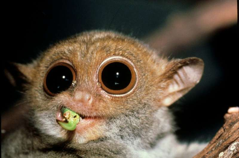 New virtual reality tool allows you to see the world through the eyes of a tiny primate