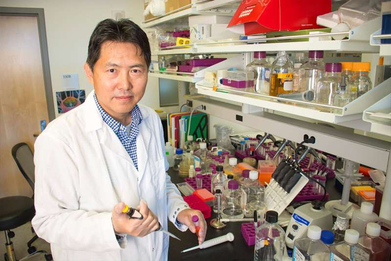 New WSU technology to improve delivery of anti-inflammatory drugs