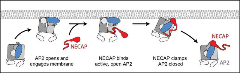 No deliveries: How cells decide when to accept extracellular packages