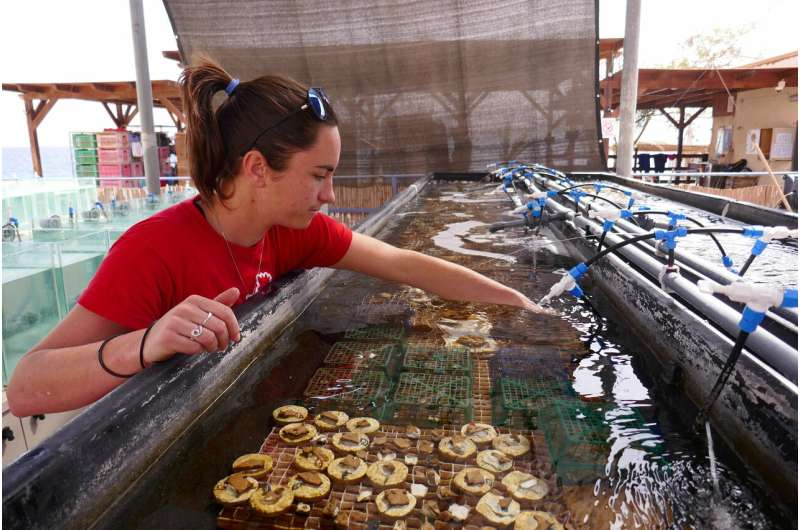 Not only do Gulf of Aqaba corals survive climate change but their offspring may too