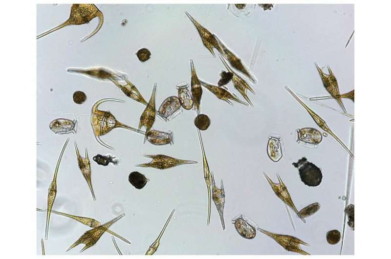 Novel methodological tool helps detect synergistic phenomena in phytoplankton growth