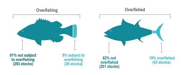 Number of US fish stocks at sustainable levels remains near record high