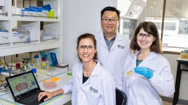 NUS researchers develop new drug that fights cancer with less renal toxicity