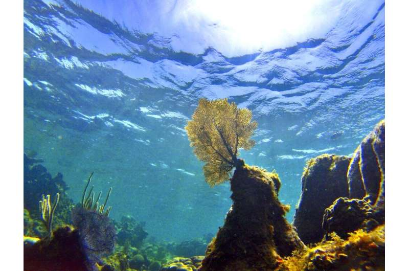 Oceans are warming even faster than previously thought