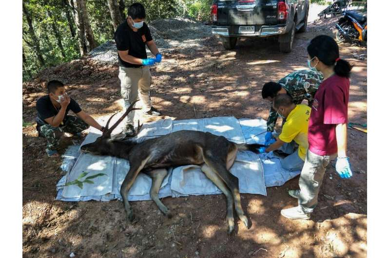 Officials said the 10-year-old deer was found dead in a national park in Nan province, around 630 kms (390 miles) north of capit