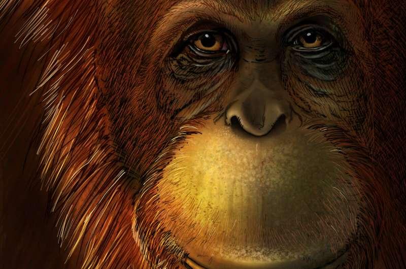 Oldest molecular information to date illuminates the history of extinct Gigantopithecus