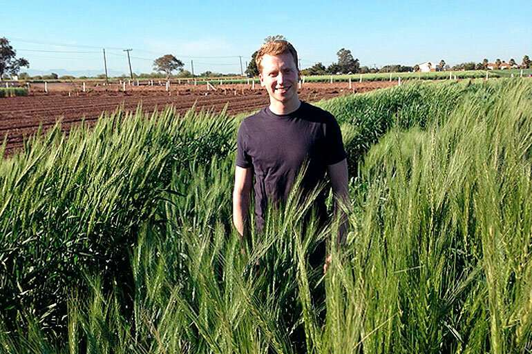 Old for new, using ancient genetic variation to supercharge wheat