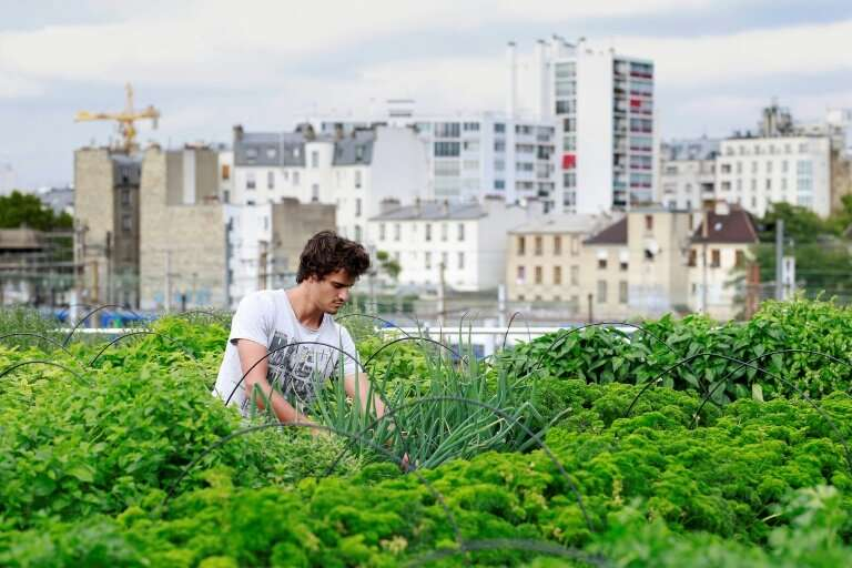 One of an estimated 800 million urban farmers in the world
