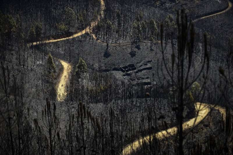 One of the plaintiffs lost all his trees in the 2017 Portugal wild fires