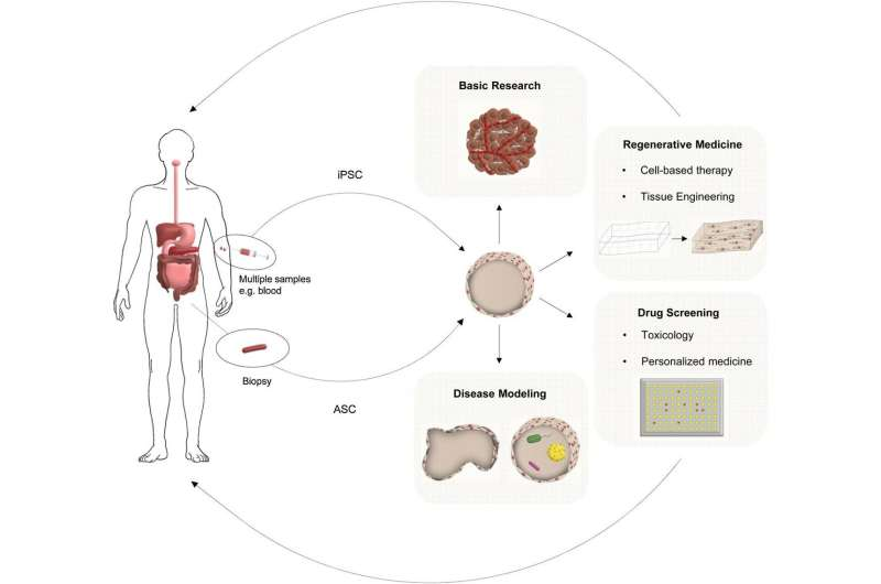 'Organs in a dish' pave the way for personalized medicine in gut and liver disease