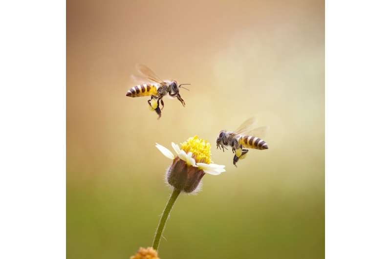 Our 'bee-eye camera' helps us support bees, grow food and protect the environment