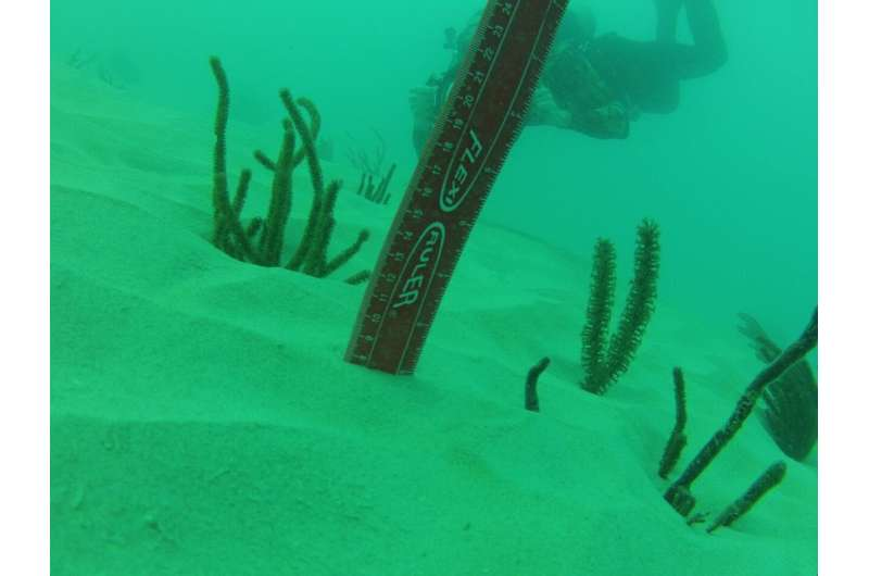 Over half a million corals destroyed by port of Miami dredging, study finds