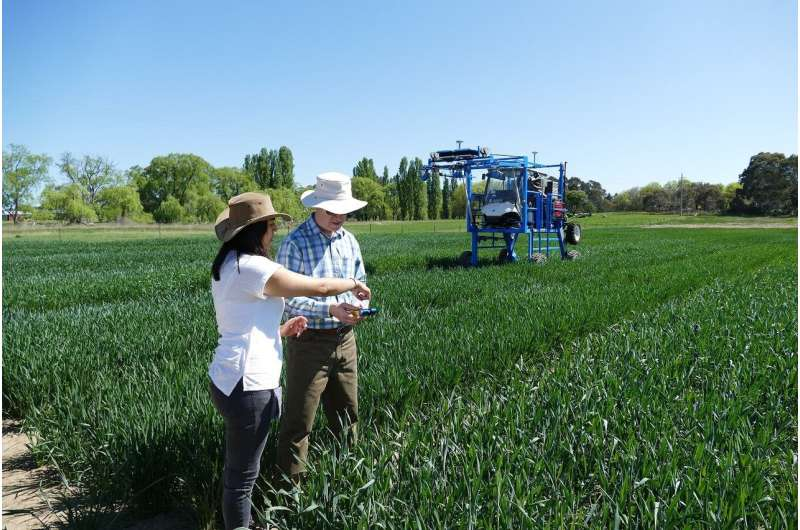 Photosynthesis Olympics: can the best wheat varieties be even better?