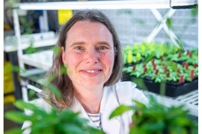 Plant nutrient detector breakthrough