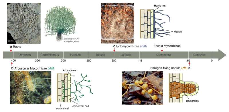 Plants and microbes shape global biomes through local underground alliances