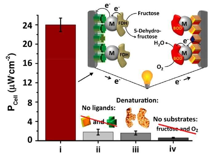 Power generation achieved by a self-assembled biofuel cell