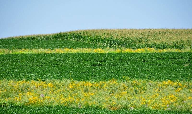 Prairie strips transform farmland conservation
