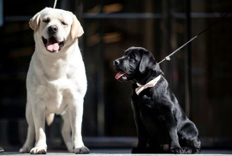 Previous tests have shown dogs are able to detect the odours of certain diseases, including some cancers, diabetes and malaria