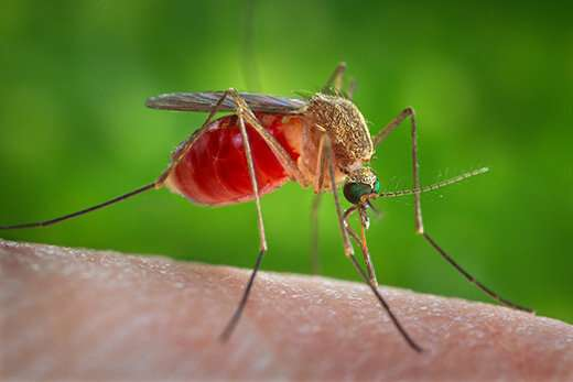 Protection from mosquitoes key to avoid West Nile virus