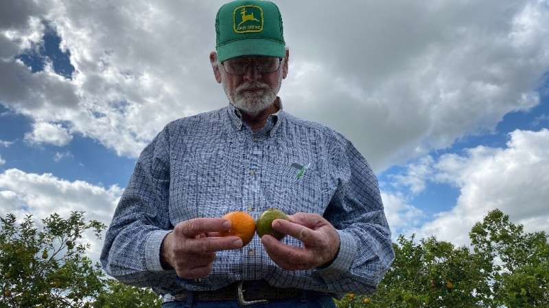 """""""We've lost a great deal of our productive capacity,"""" said Peter Spyke, a third-generation citrus farmer"""