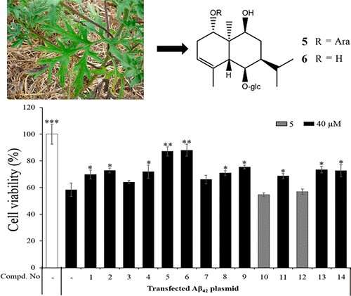 Ragweed compounds could protect nerve cells from Alzheimer's