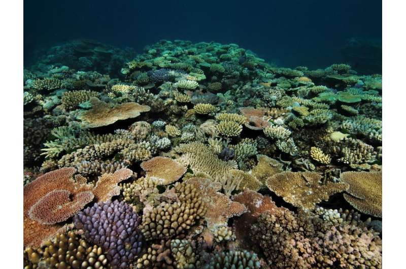 Rapid coral death and decay, not just bleaching, as marine heatwaves intensify