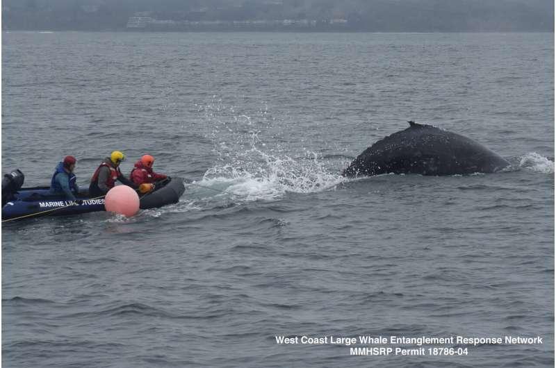 Rescuers free entangled humpback whale off California coast