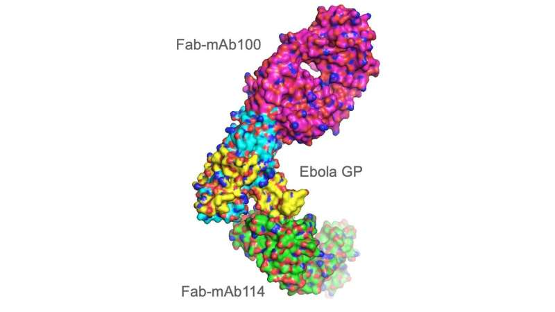 Research at Advanced Photon Source leads to new Ebola drug