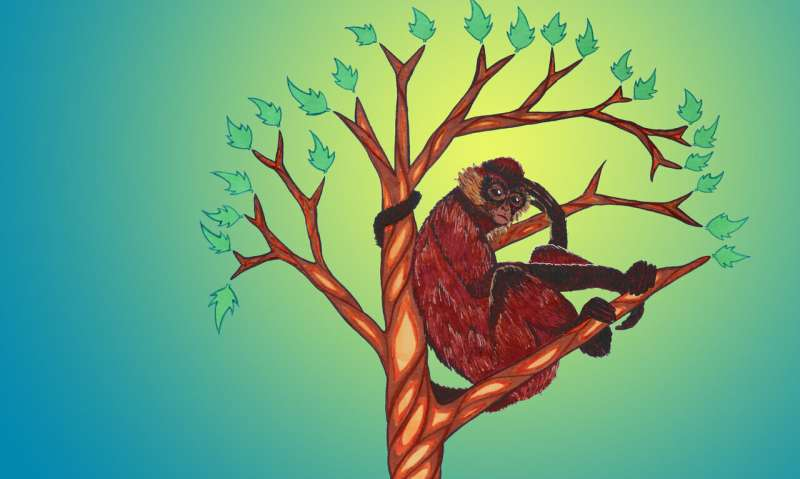 Research bias may leave some primates at risk