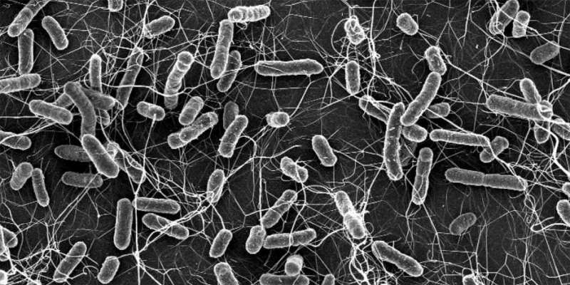 Resistance can spread even without the use of antibiotics