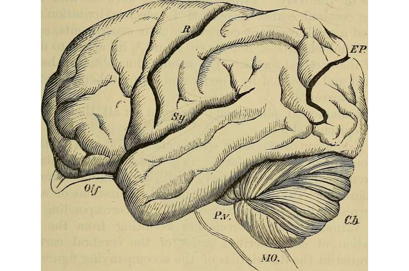 Respiration key to increase oxygen in the brain