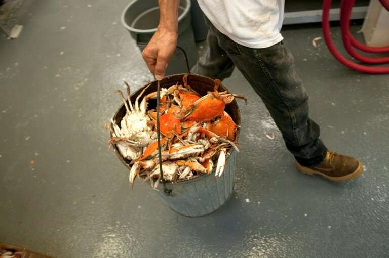 Restaurants and small shops including fishmongers commit more fraud than big supermarkets because the latter are subject to stri