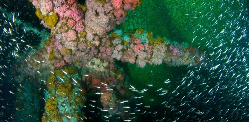 Retired oil rigs off the California coast could find new lives as artificial reefs