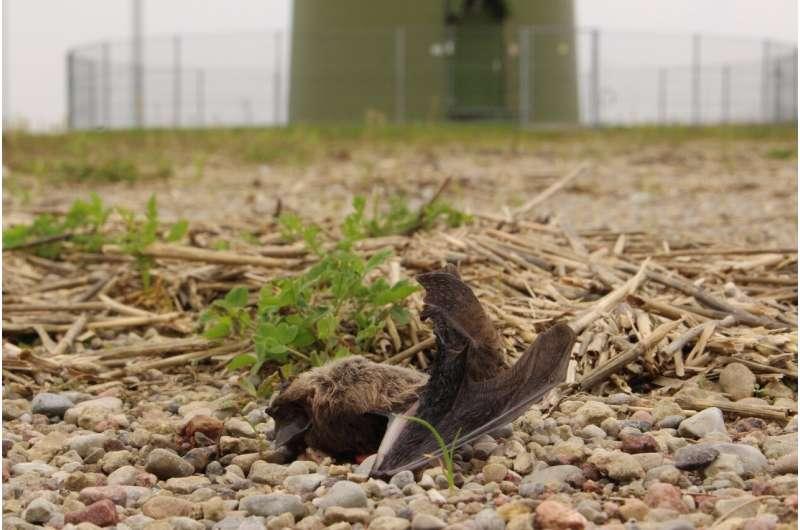 Saving bats from wind turbine death
