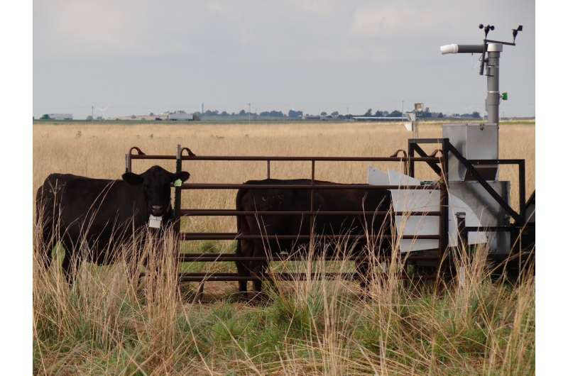 Scientists breathalyze cows to measure methane emissions