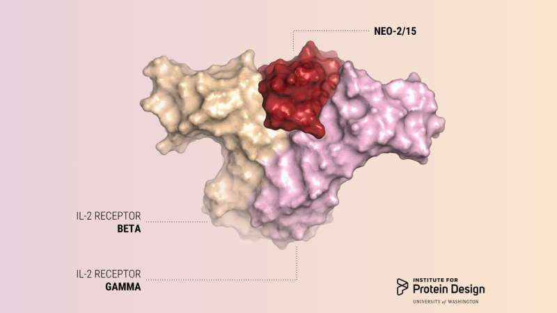 Scientists design protein that prods cancer-fighting T-cells
