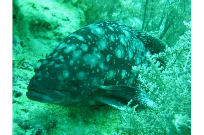 Scientists look to past to help identify fish threatened with local extinction