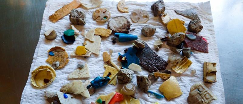 Seabirds' cholesterol levels raised through plastic ingestion